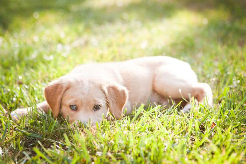 Pet Friendly | We offer pet friendly apartments in Prattville. Large breeds are accepted too!