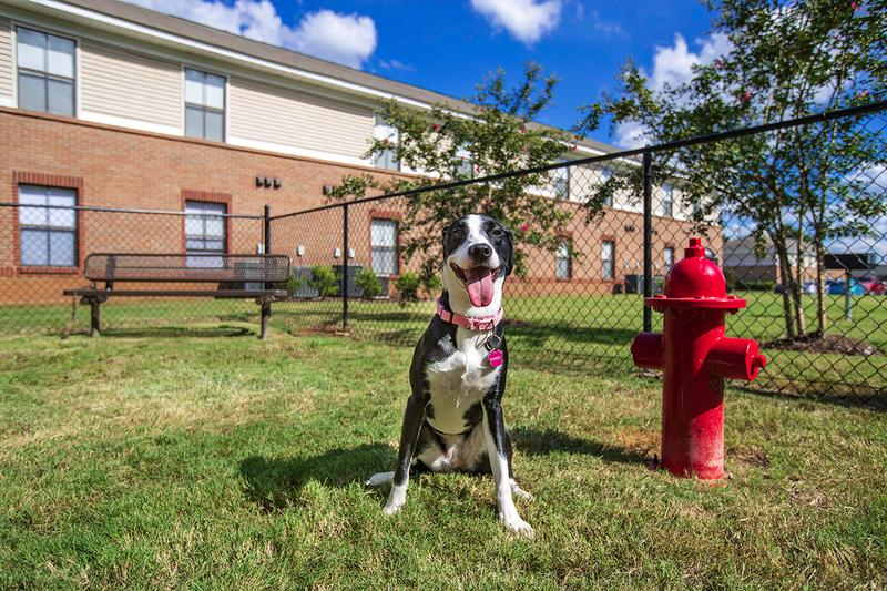 Dog Park | At The Mills at 601, we offer pet friendly apartments in Prattville! Bring your furry friend to our on-site dog park for some exercise.
