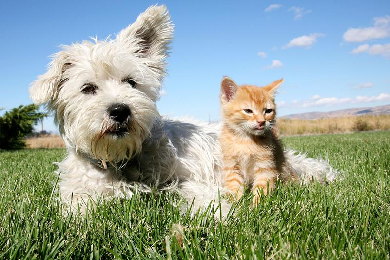 Pet Friendly | Eden Pointe offers pet friendly apartments in Bradenton, so be sure to bring your furry friend along!
