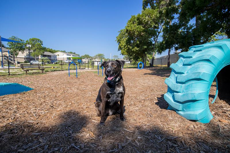 Dog Park | We offer pet friendly apartments in Gulf Breeze, FL and even have an on-site dog park.