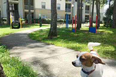 Dog Park | Bring your furry friend down to our off-leash dog park for some exercise.