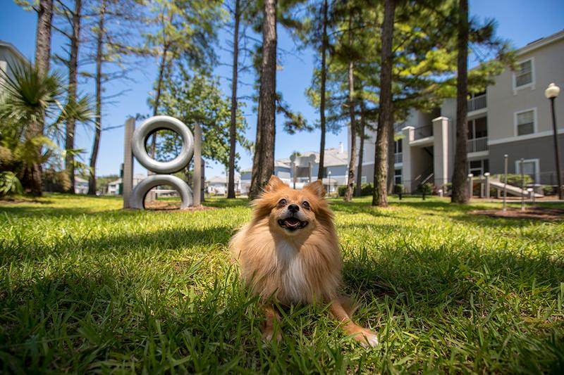 Dog Park | Banyan Bay apartments in Jacksonville is a pet friendly community. We even have an off-leash dog park right on site!