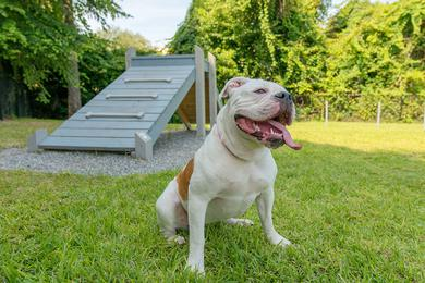 Dog Park | Indigo Isles is a pet friendly community and even has an off-leash dog park.
