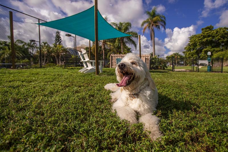 Dog Park | Bring your four-legged friend down to our brand new dog park.