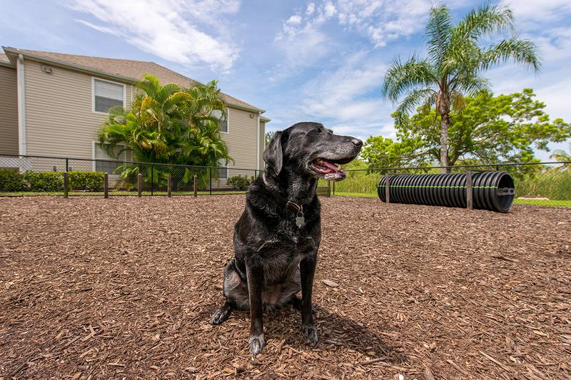 Pet Friendly | Meadow Lakes offers pet friendly apartments in Naples.
