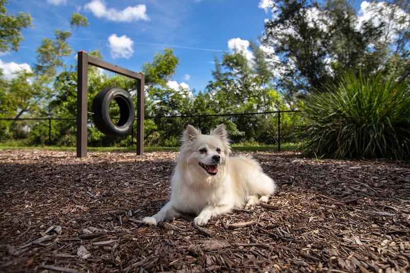 Paw Park | Bring your dog down to our brand new, on-site paw park. Complete with agility equipment!