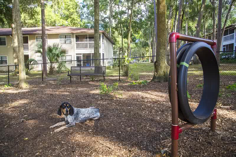 Dog Park at Carrington Lane | Your furry friend will love playing in our dog park.