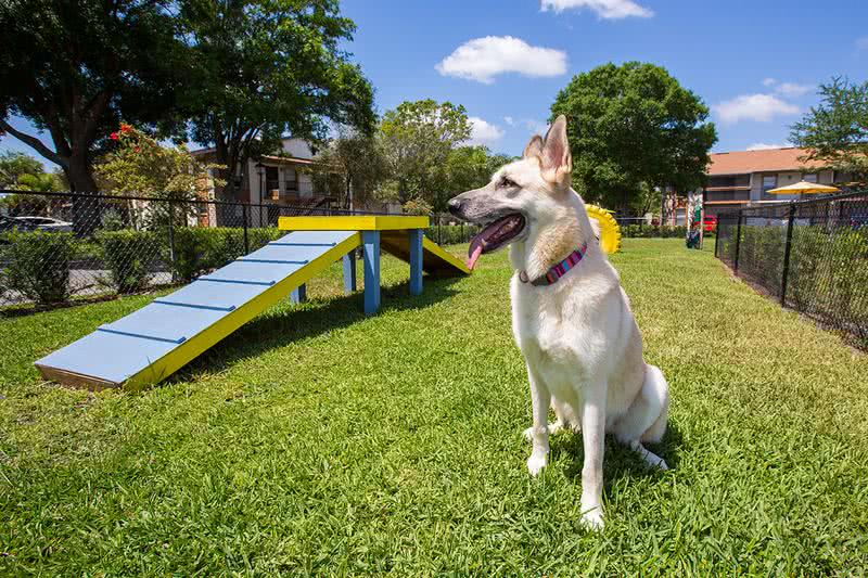 Dog Park | Adele Place is a pet friendly community featuring an on-site dog park.