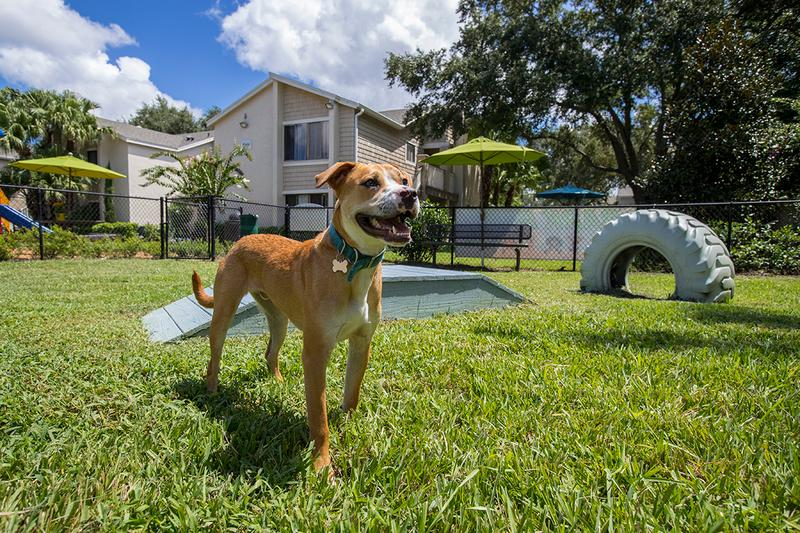 "Bark Park | Our community is pet friendly and we even have a ""Bark Park""! Bring your furry friend down for some exercise and to make new friends!"