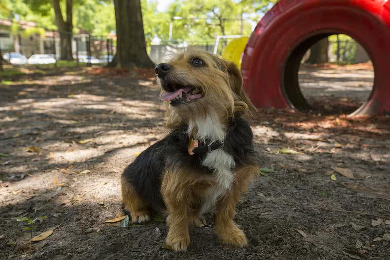 Dog Park | Our on-site dog park is a great place for your furry friend to get some exercise and meet new friends.