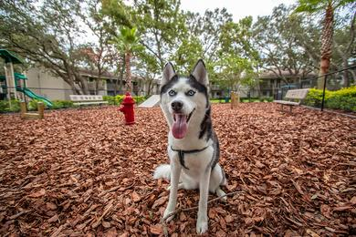 Off-Leash Dog Park | Your furry friend will love running around in our off-leash dog park with agility equipment.