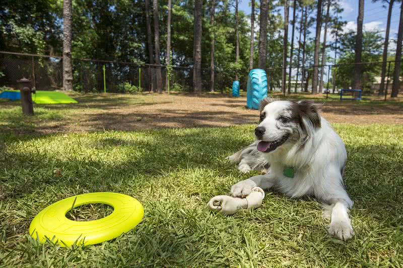 Dog Park | Your dog will absolutely love our dog park complete with agility equipment.