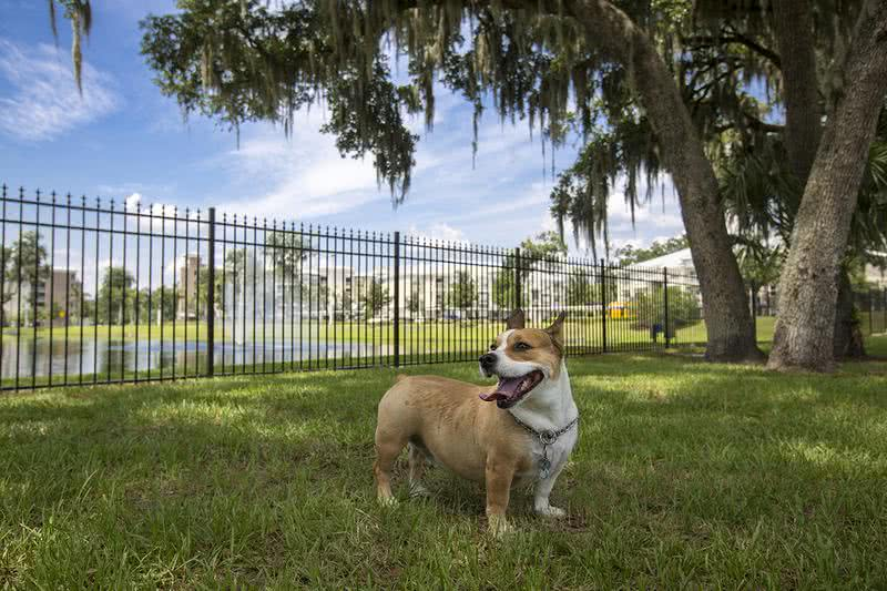 Off-Leash Dog Park | Bring your furry friend to our off leash dog park for some exercise.