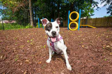 Pet Friendly | The Enclave is a pet friendly community and has an off-leash dog park.