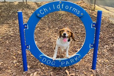 Dog Park | Your dog will love coming down to our off-leash dog park and playing with friends.