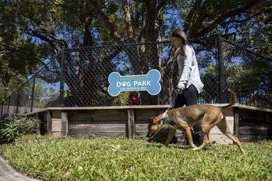 Dog Park | Allister Place is a pet friendly community featuring an on-site dog park.