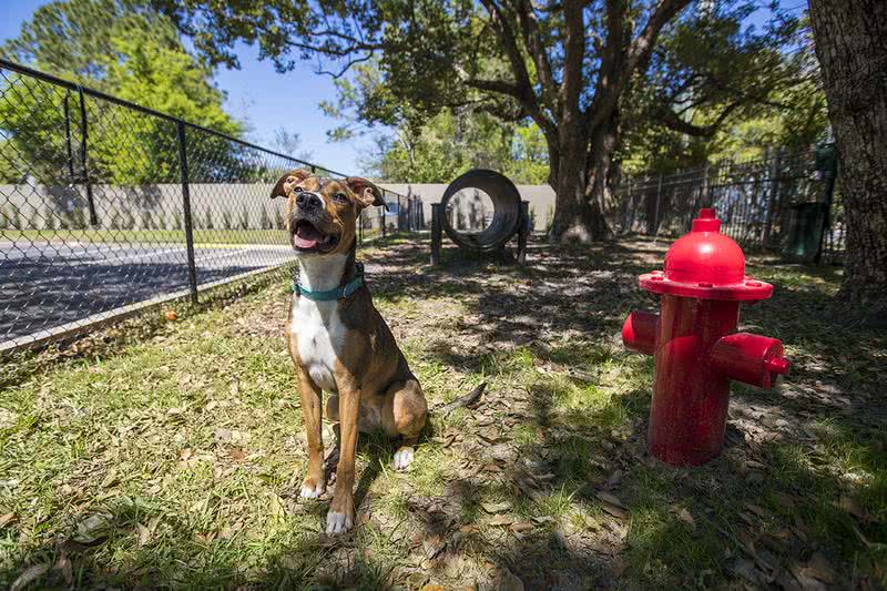 Pet Friendly Apartments | We offer pet friendly apartments in Tampa and we even accept large breeds. Your furry friend will love our on-site Dog Park.