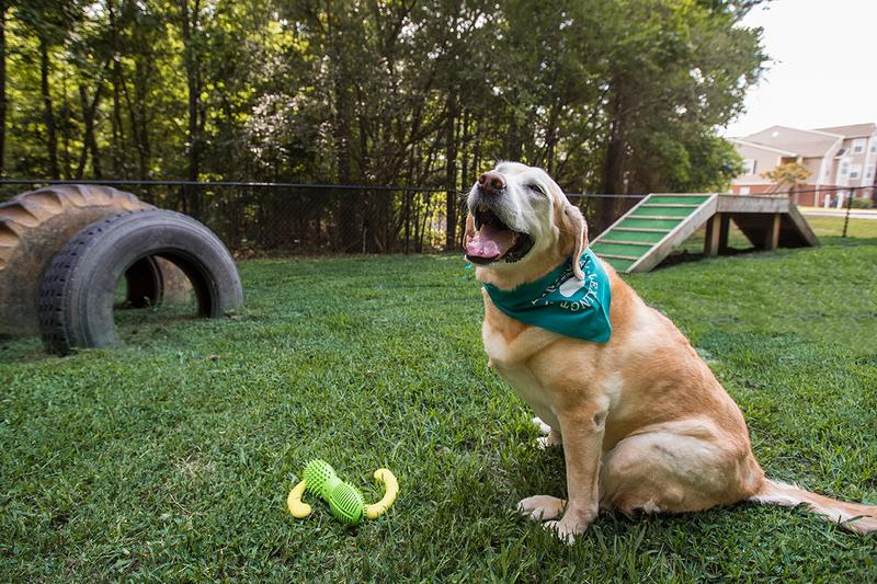 Dog Park | Slate is a pet friendly apartment community featuring an off-leash dog park.