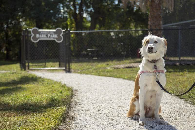 Dog Park | Be sure to bring your four legged friend to our brand new dog park.