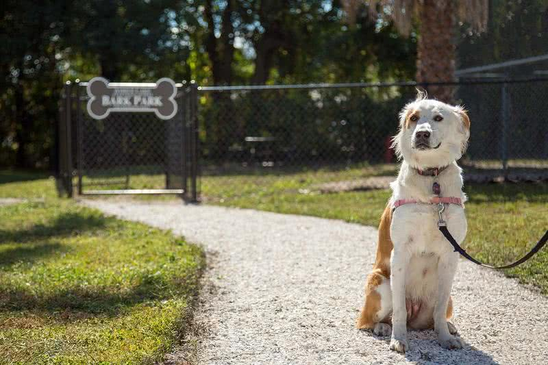 Dog Park | We are a pet friendly community and even have a dog park on-site.