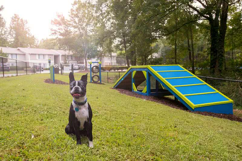 Dog Park | Take your furry friend to our off-leash dog park, complete with agility equipment.
