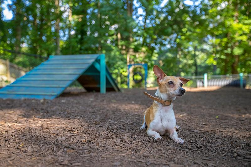 Pet Friendly with Off-Leash Dog Park | An ideal community for furry friends, most breeds welcome!