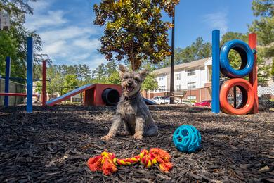Dog Park | Bring your four legged friend to our off-leash dog park with agility equipment.