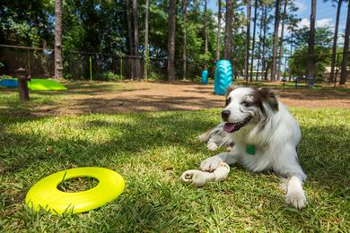 Pet Friendly | We are a pet friendly community. Off-leash dog park coming soon!