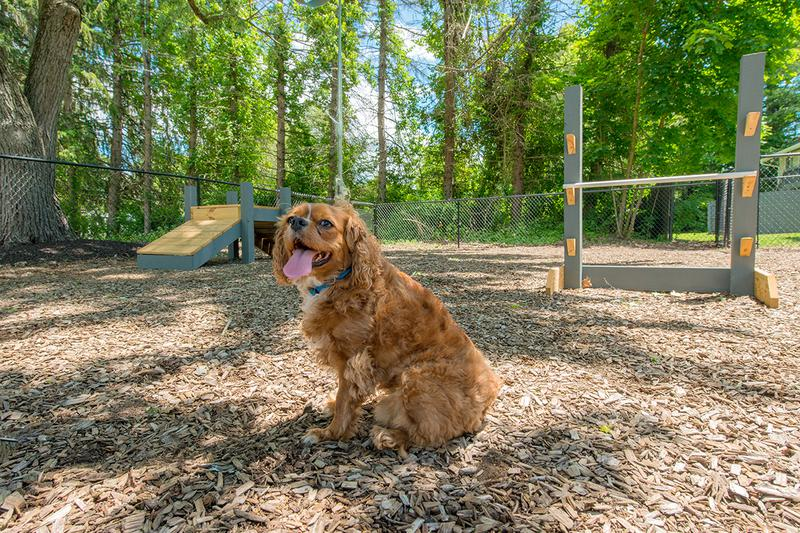Pet Friendly | Alpine Commons is a pet friendly community with an off-leash dog park.