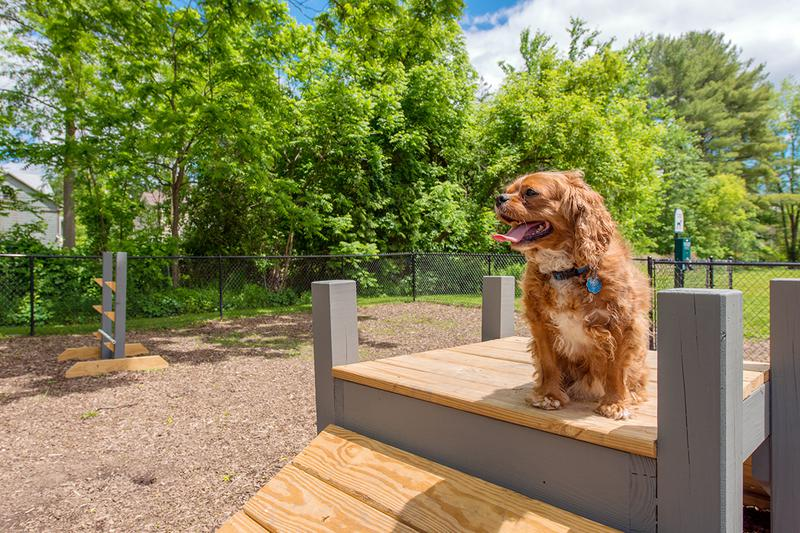 Dog Park | Bring your furry friend down to our off-leash dog park for some fun.