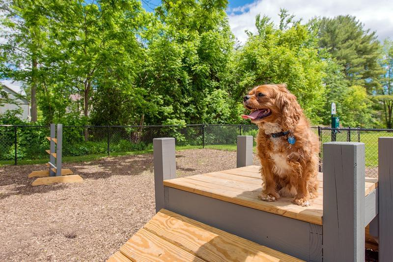 Off Leash Dog Park | Aspen Chase is a pet friendly community and we have an off-leash dog park so your furry friend can get some exercise.