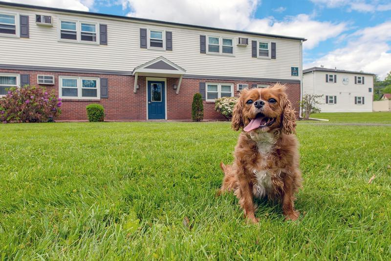 Pet Friendly | Aspen Chase offers pet friendly apartments in Amherst.