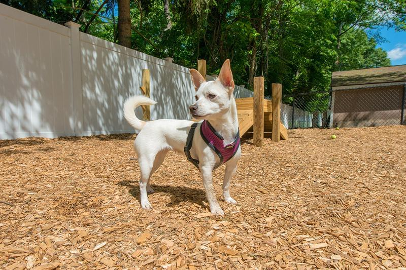 Pet Friendly with Dog Park | We offer pet-friendly apartments in Chicopee!