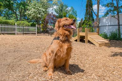 Dog Park | We offer pet friendly apartments in Chicopee. We even have an off-leash dog park!