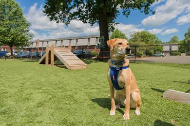 Dog Park | Your dog will love our brand new dog park.