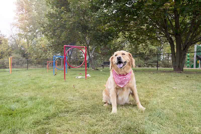 Off-Leash Dog Park | Bring your furry friend to our brand new off-leash dog park for some fun!