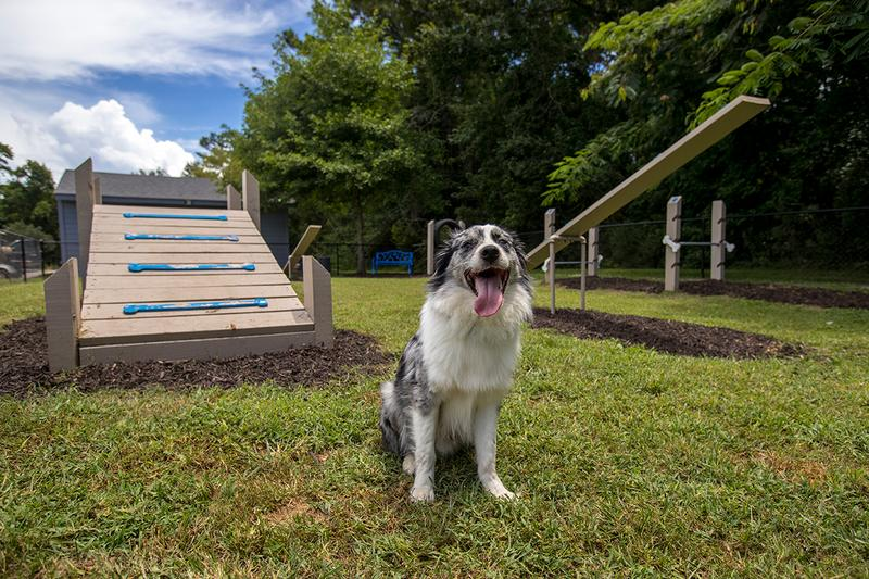 Dog Park | Be sure to bring your furry friend to our off-leash dog park for some exercise!