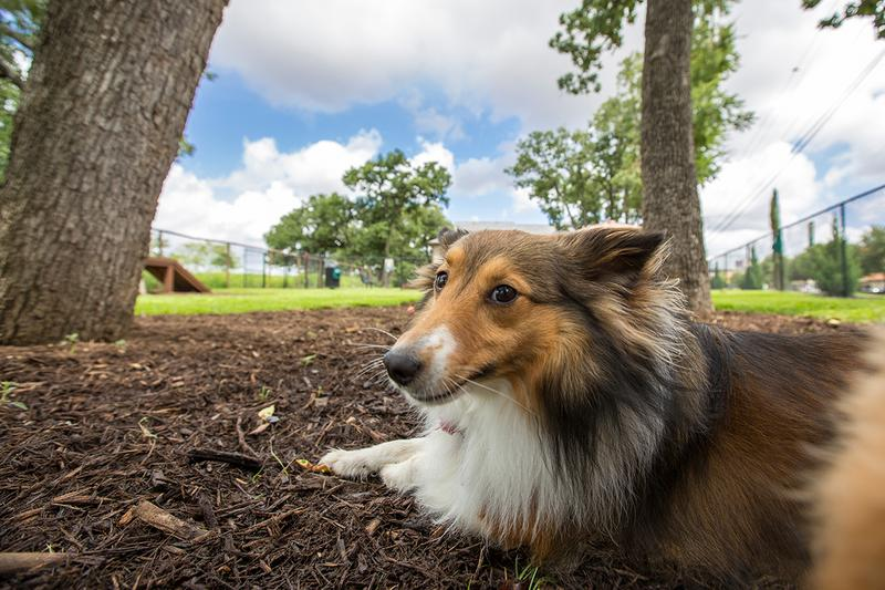 Dog Park | Your furry friend will love spending time in our off-leash dog park!