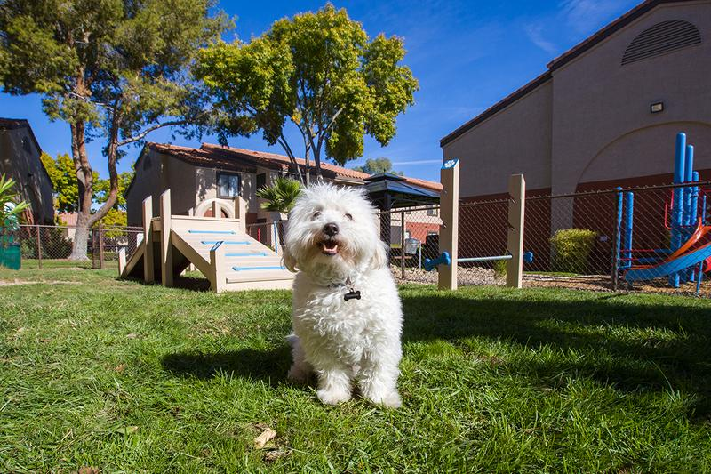 Pet Friendly | Millennium East is a pet friendly community. Off-Leash Dog Park coming soon!