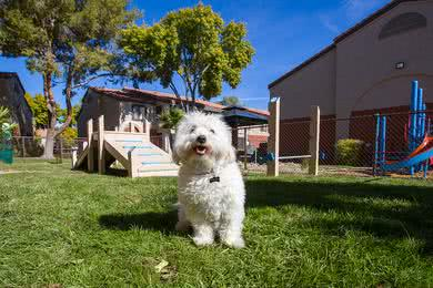 Dog Park | Vue 5325 is a pet friendly community and has an off-leash dog park.