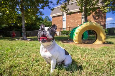 Paw Park | Collins Crossing is pet friendly and even has an off-leash dog park!