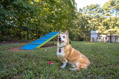 Off-Leash Dog Park | Bring your furry friend down to our off-leash dog park for some fun.