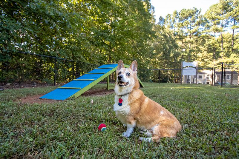 Agility Equipment | Your pup will love running around in our dog park complete with agility equipment.