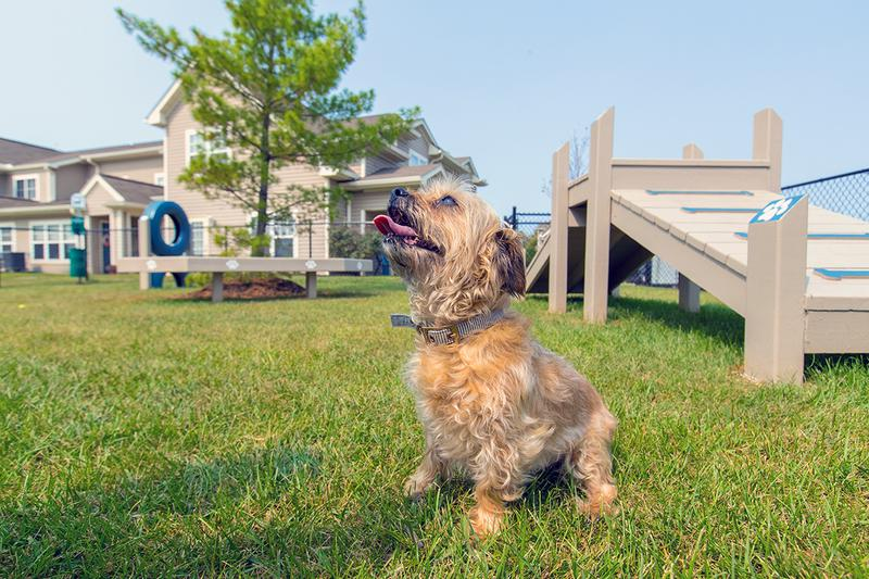 Pet Friendly | We offer pet friendly apartments in Monroe, so be sure to bring your furry friend along!
