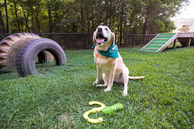 Dog Park | Your dog will love our dog park featuring agility equipment.