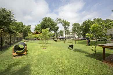 Dog Park | The Element at University Park is a pet friendly community and has an off-leash dog park.